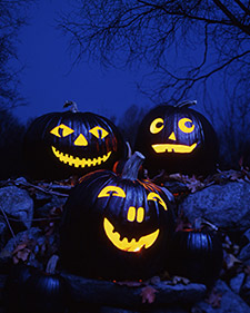 Black_pumpkins_2